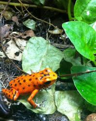 ONomNom Strawberry Frog