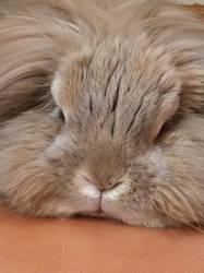 Brillo Bunny