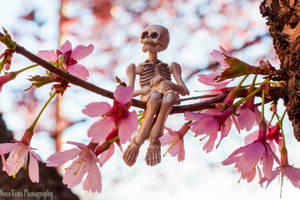 Enjoying Spring by novavistaphotography