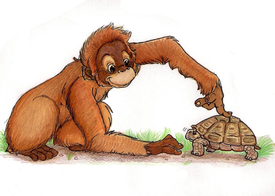Orangutan by calistamonkey