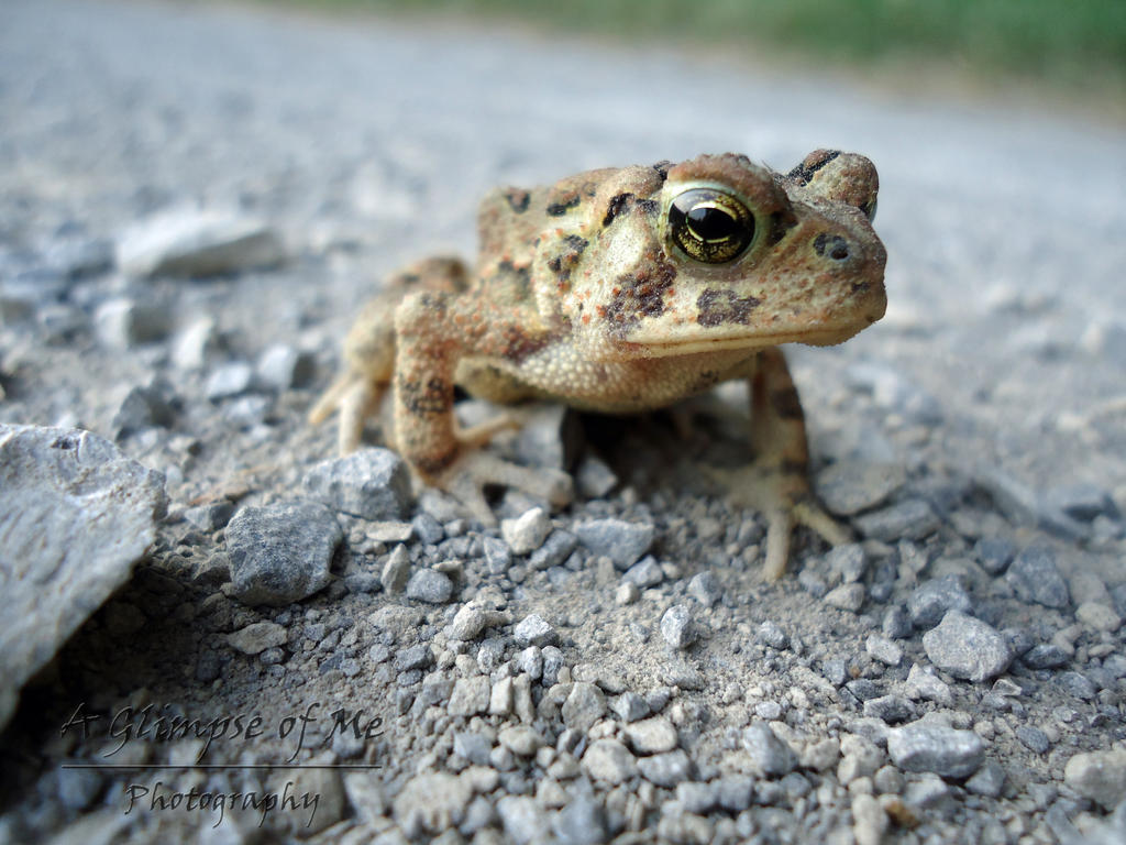 little toad on the road by aglimpseofme on deviantart