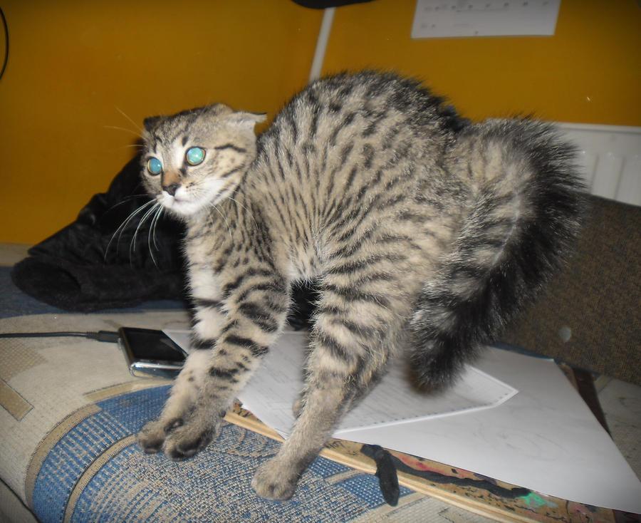 kitten color sheets