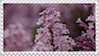 lilac stamp no text by Chaitte