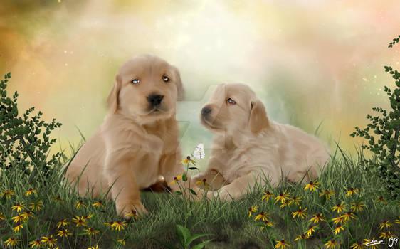 Puppy love..
