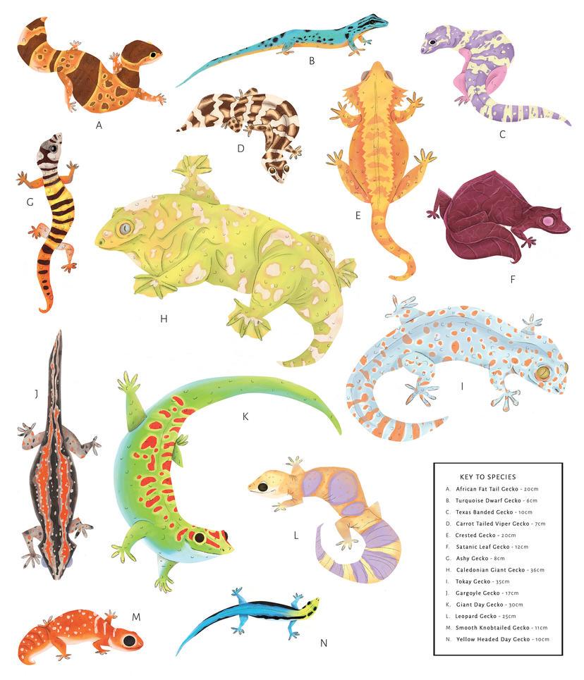Geckos !!! by hannahv92