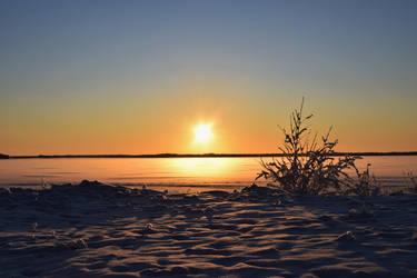 Snowy bush on sunset