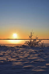 Snowy bush on sunset 2