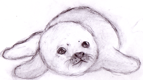 Baby Seal by leniinha on DeviantArt Baby Arctic Seal Drawing