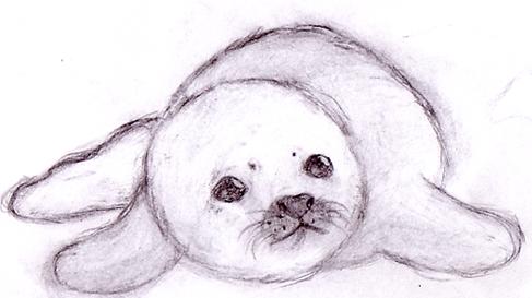 Baby Seal by leniinha