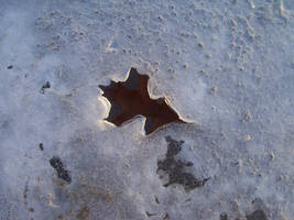 Auraed Leaf