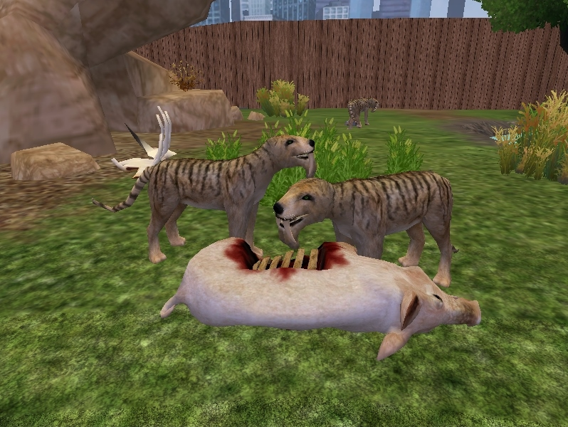 Zoo Tycoon 2 Showcase: Thylacosmilus by ProfDanB on DeviantArt