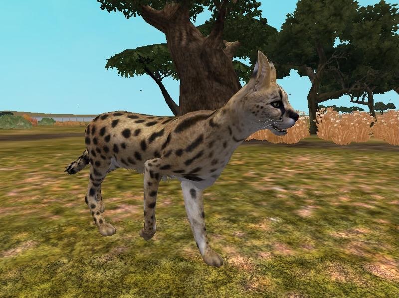 Zoo Tycoon 2 Showcase-Serval by ProfDanB on DeviantArt