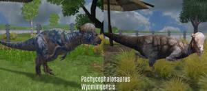 ZT2 Showcase - Pachycephalosaurus
