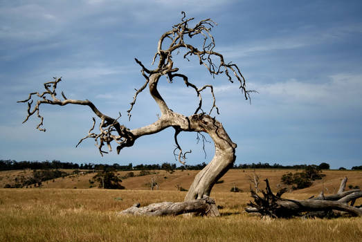 Dead Tree out there