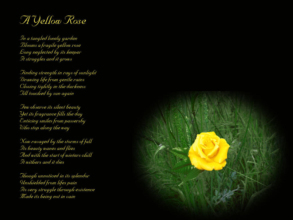 A Yellow Rose Poem Wall By Midnightstouch On Deviantart