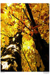 Yellow by spiffyramen