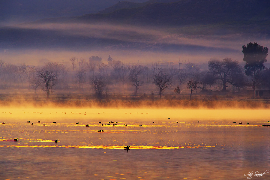 Misty Morning.. by M-Atif-Saeed