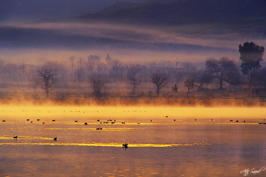 Misty Morning.. by M-Atif-Saeed
