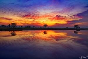 Metallic Sunset..
