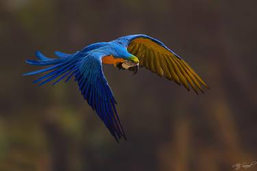 Flight.. by M-Atif-Saeed