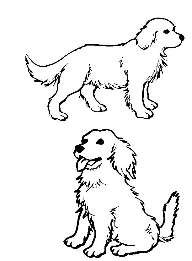 Line Drawing Golden Retriever : Golden retriever lineart by kittenglovergin on deviantart