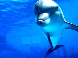 .Dolphin