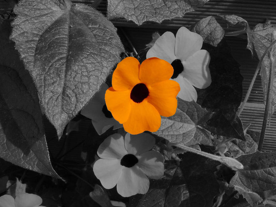 Flowers black white coloured by deviloflife01