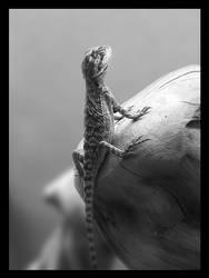 Bearded Dragon Juvenile by beegearama