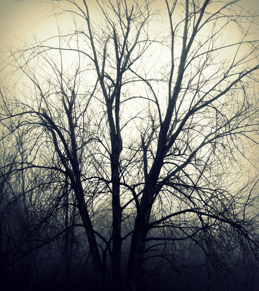tree in fog by kaylalphotography