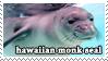 Hawaiian Monk Seal by WaywardSoothsayer