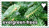 Evergreen Trees by WaywardSoothsayer