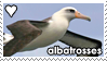 Albatrosses by WaywardSoothsayer