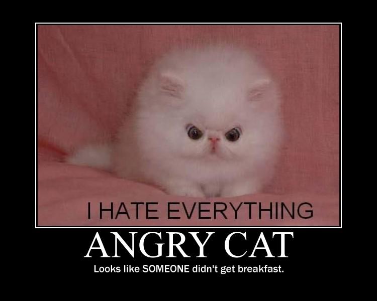 cat demotivational poster2 by Weirddudeguy
