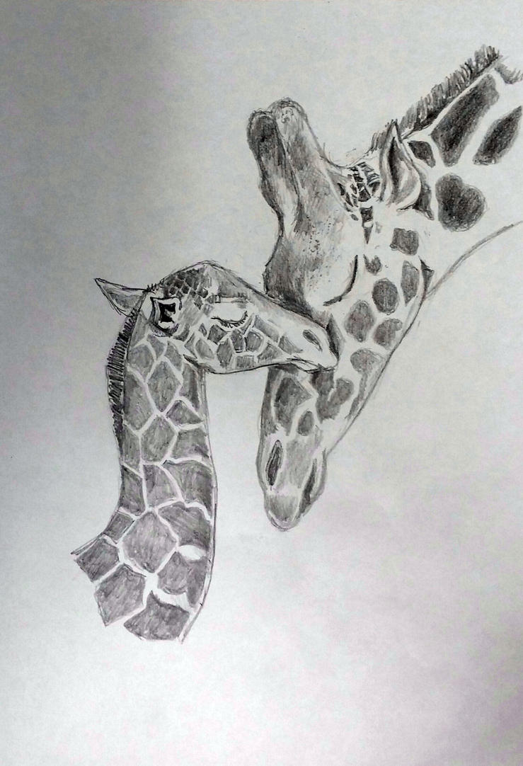 Giraffe face drawings