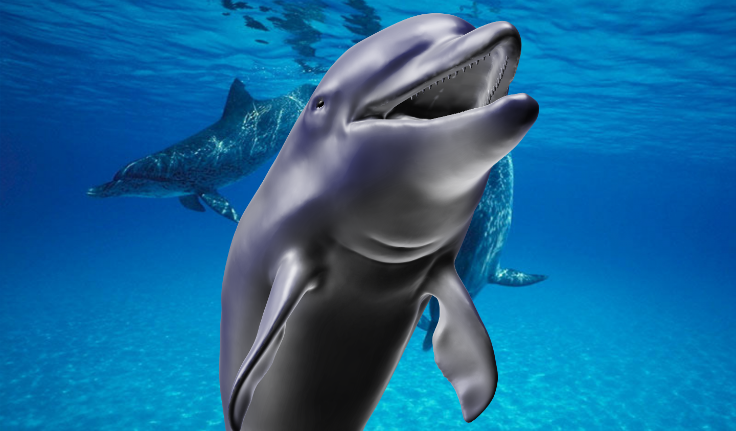 Sculptris: Dolphin Wallpaper by Banjooie64