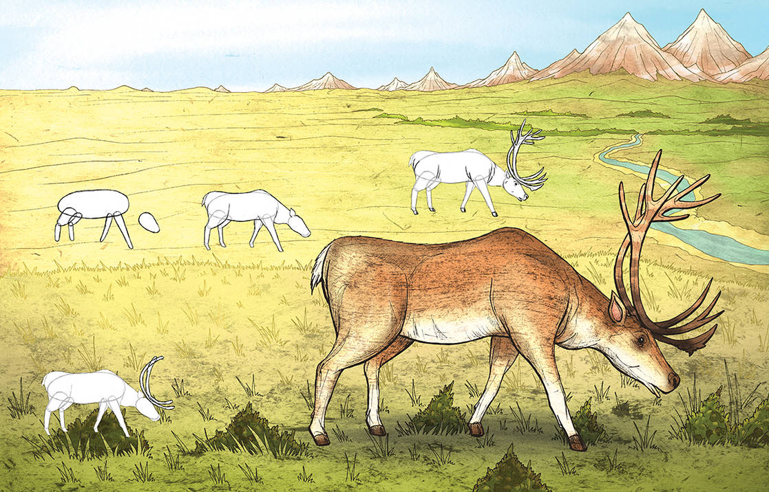 Learning to draw animals - Caribou by Si2