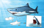 Learning to draw animals - Great White Shark