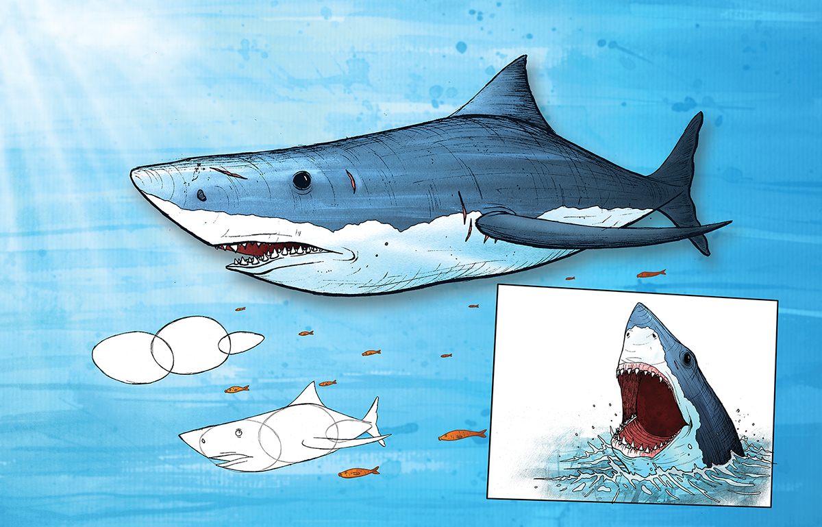 Learning to draw animals - Great White Shark by Si2