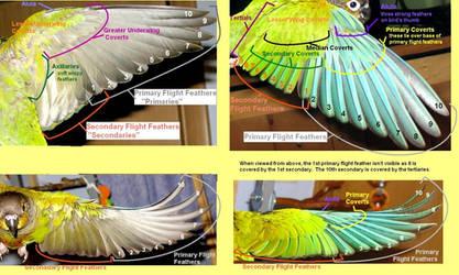 Wings by greencheek