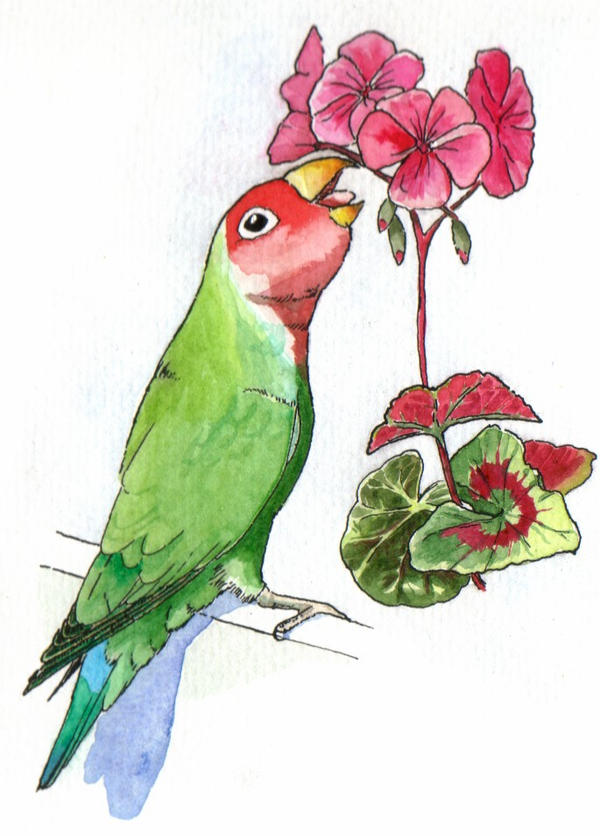 Lovebird by greencheek