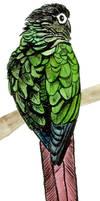 Greencheek by greencheek
