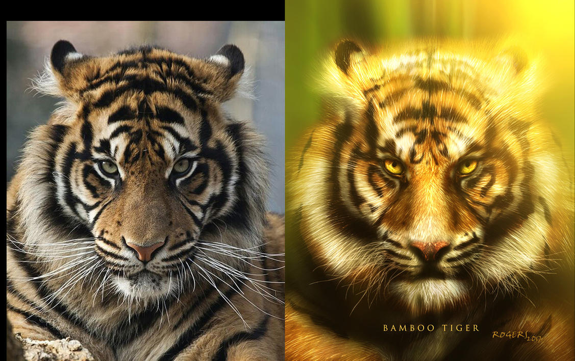 Bamboo Tiger Photo Reference by Red-Rogers