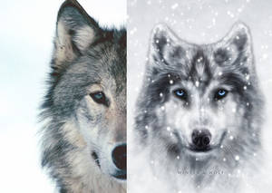 Wolf Reference