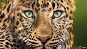LeopardDesktopColor 1920x1080 RedRogers