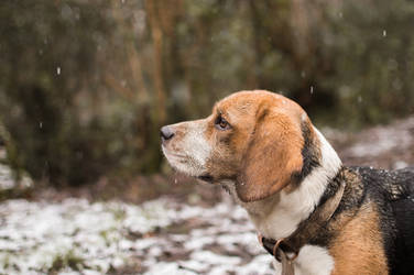 winter pup by MrSouthwell