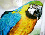 Tracy's Parrot