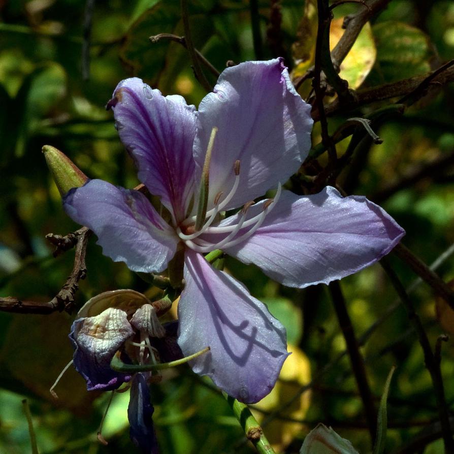 Big purple flower by vindex1963 on deviantart big purple flower by vindex1963 mightylinksfo