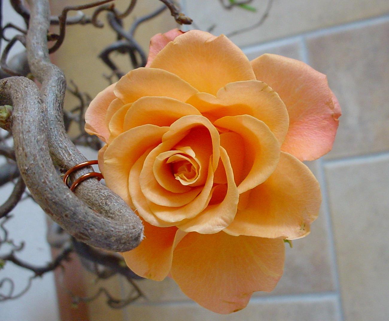 Rose by Tobiaz-G