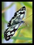 Kelebek 0 Butterfly 676 by bbraun