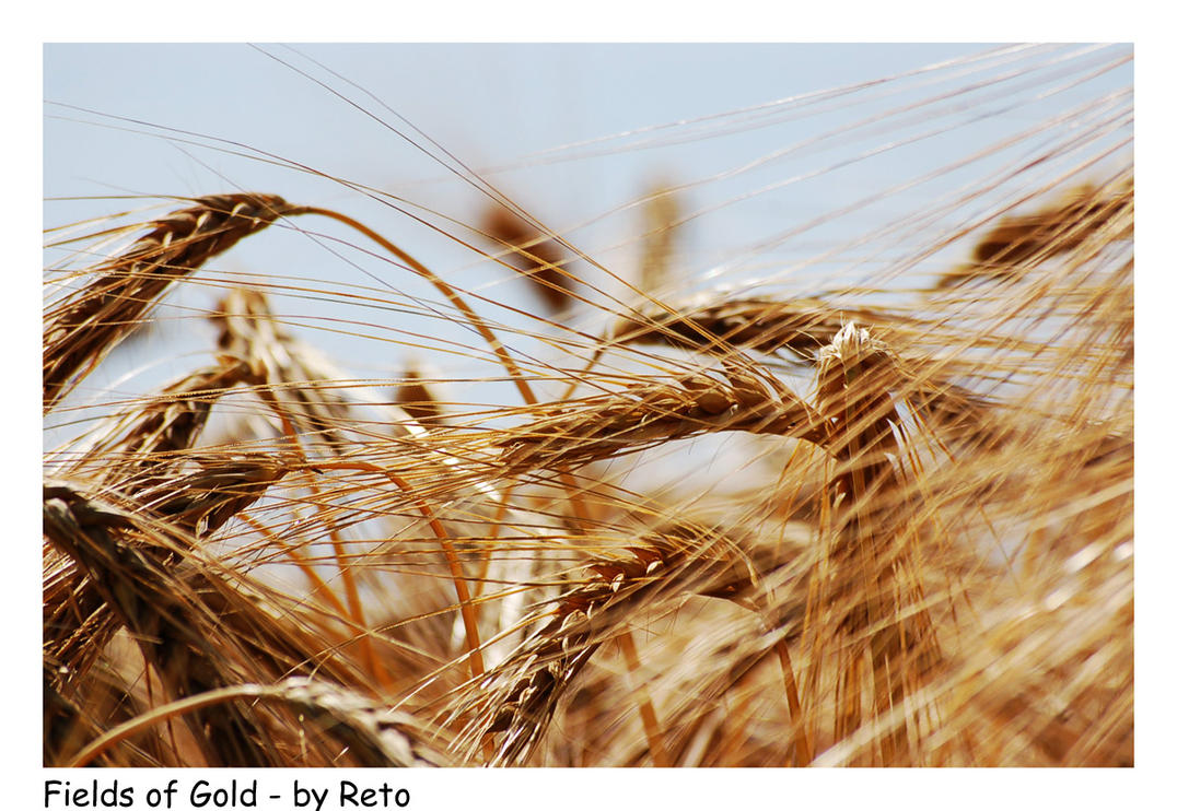 Fields of Gold 2 by Reto